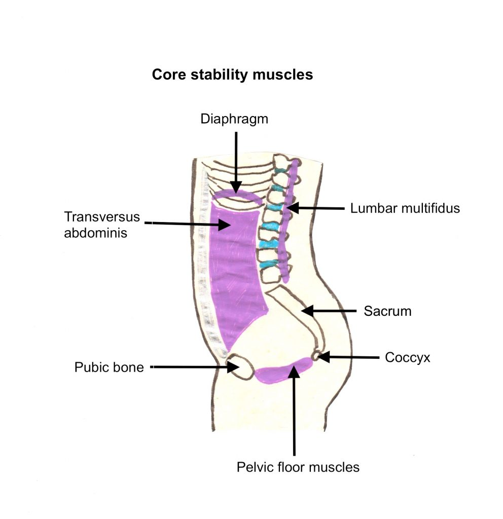 Diagram showing the core stability muscles